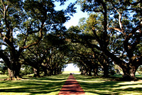 Tree lined path, Oak Alley Plantation, LA